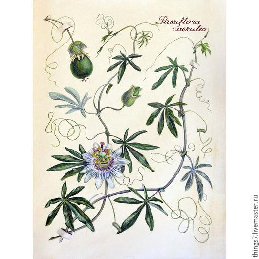 Картины цветов ручной работы. Ярмарка Мастеров - ручная работа. Купить Пассифлора. Handmade. Тёмно-зелёный, ботанический рисунок, картина
