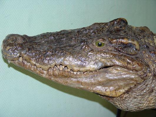 Текстиль, ковры ручной работы. Ярмарка Мастеров - ручная работа. Купить Ковер из шкуры крокодила. Handmade. Хаки, крокодиловая кожа
