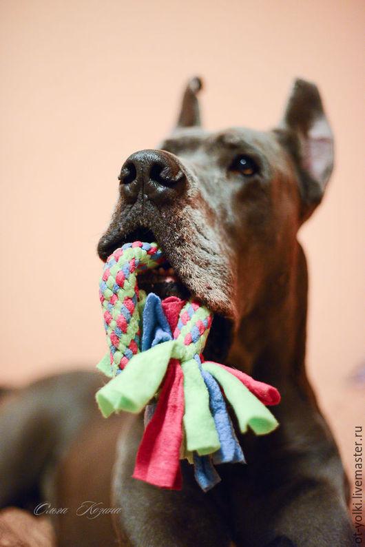 Аксессуары для собак, ручной работы. Ярмарка Мастеров - ручная работа. Купить Кольцо из флиса. Handmade. Комбинированный, флис