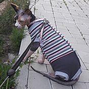 """Для домашних животных, handmade. Livemaster - original item Одежда для кошек """"Боди Полосатый леденец"""". Handmade."""
