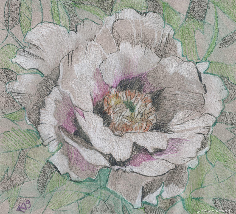 «Во всей красе» Картина пион рисунок цветы, Картины, Москва,  Фото №1