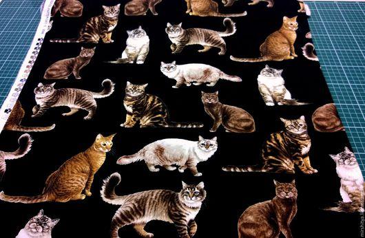 Котики на черном