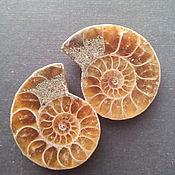 Материалы для творчества handmade. Livemaster - original item The Ammonite. pair. Handmade.