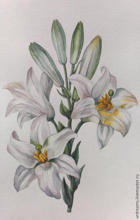Картины цветов ручной работы. Ярмарка Мастеров - ручная работа. Купить Белая лилия. Handmade. Белый, акварельные цветы