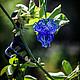 """Для украшений ручной работы. Ярмарка Мастеров - ручная работа. Купить Бусина """"Лилия"""". Handmade. Цветы, тёмно-синий"""