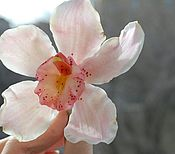 Украшения ручной работы. Ярмарка Мастеров - ручная работа Розовая орхидея цимбидиум( шпилька). Handmade.