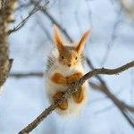 netsquirrel (squirrel-socks) - Ярмарка Мастеров - ручная работа, handmade