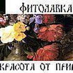 Фитолавка - Ярмарка Мастеров - ручная работа, handmade