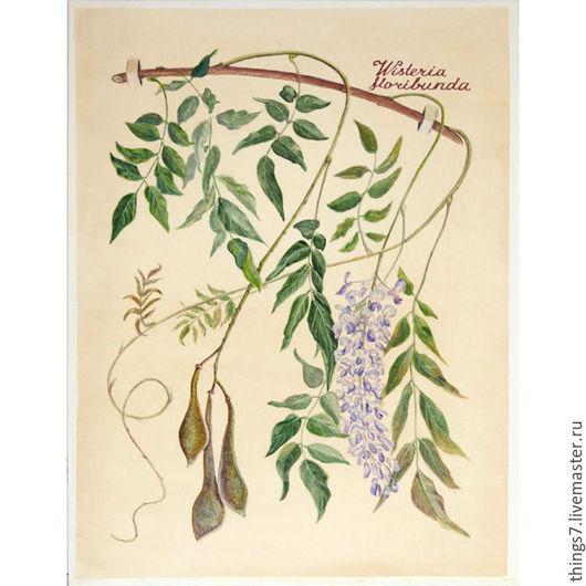 Картины цветов ручной работы. Ярмарка Мастеров - ручная работа. Купить Глициния. Handmade. Комбинированный, ботаника, ботанический рисунок, акварель