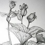 """Картины ручной работы. Ярмарка Мастеров - ручная работа Рисунок """"Бузульник"""" (графика, 42х60 см). Handmade."""