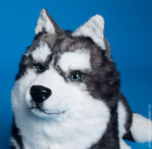 Куклы и игрушки ручной работы. Ярмарка Мастеров - ручная работа. Купить Собака Хаски в натуральную величину. Handmade. Игрушка собака