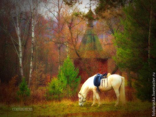 Фотокартина «Краски осени. Белая лошадка в Новом Иерусалиме». Авторская фоторабота Виталия Фотокраска. Предлагается в разных рамах и в разных форматах.
