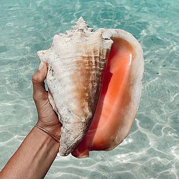 Для дома и интерьера ручной работы. Ярмарка Мастеров - ручная работа Большие раковины морские натуральные для декора. Handmade.