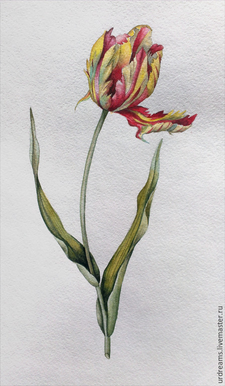 Картины цветов ручной работы. Ярмарка Мастеров - ручная работа. Купить Тюльпан Жардин. Handmade. Разноцветный, акварельные цветы