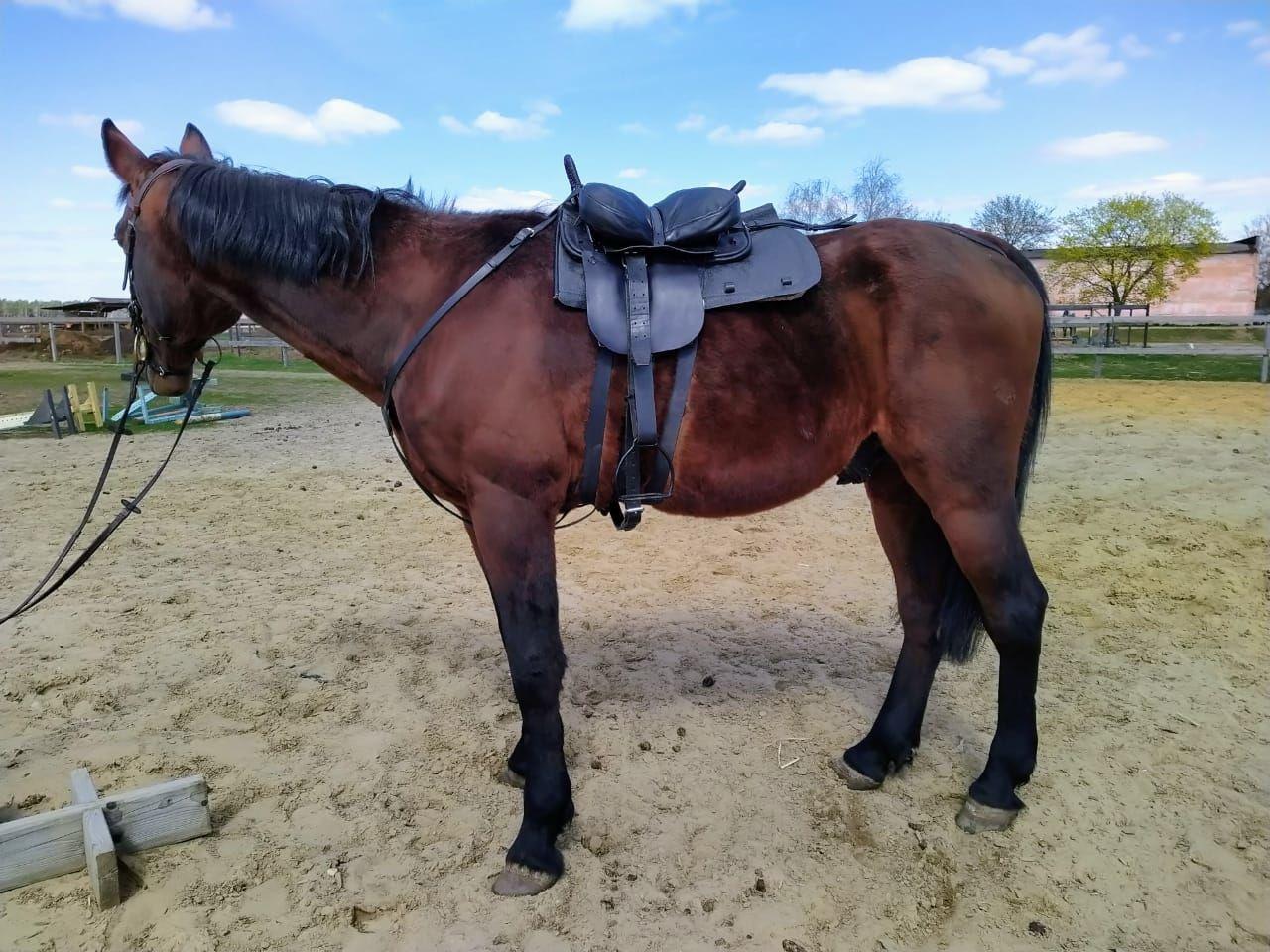 Horse Saddle Cossack, Saddles, Kirov,  Фото №1