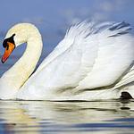 Белый лебедь - Ярмарка Мастеров - ручная работа, handmade