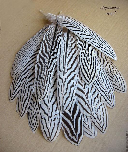 Другие виды рукоделия ручной работы. Ярмарка Мастеров - ручная работа. Купить Перо серебристого фазана. Handmade. Чёрно-белый