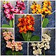 Материалы для флористики ручной работы. Ярмарка Мастеров - ручная работа. Купить Букет орхидей 30 см. Handmade. Разноцветный, цветы
