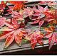 Материалы для флористики ручной работы. Заказать Ветка осеннего дерева резная. ' ИскУшениЕ для ХомоЧкИ'. Ярмарка Мастеров. Листья, зелень