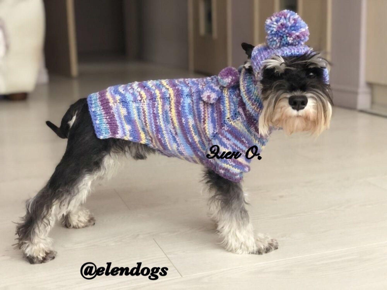 Комплект (свитер и шапка) для собак мелких пород. Элен О, Одежда для питомцев, Санкт-Петербург,  Фото №1