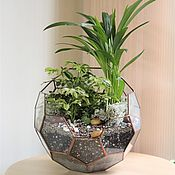 Цветы и флористика handmade. Livemaster - original item The Floriana plants. The Floriana ball ficus. Handmade.