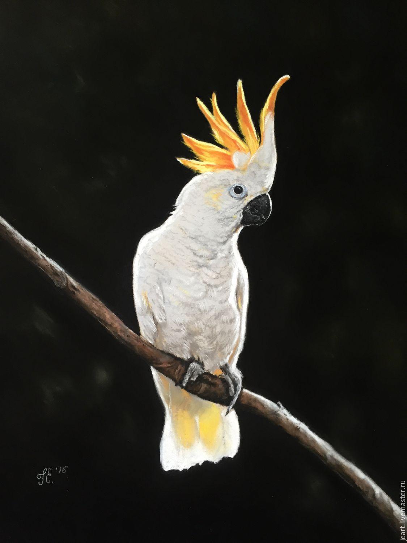 попугай фото какаду