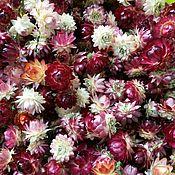 Материалы для творчества handmade. Livemaster - original item Helichrysum, dried flowers AVAILABLE. Handmade.