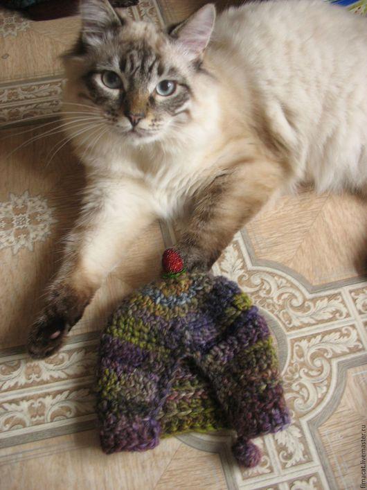 Мой младший (и любимый, конечно!) котенок (хорош котенок - почти 4 кг в 7 месяцев) невский маскарадный Мифкун с грелкой. Так она ему нравится - из лапок бы не выпускал! Пришлось отдать этот экземпляр!