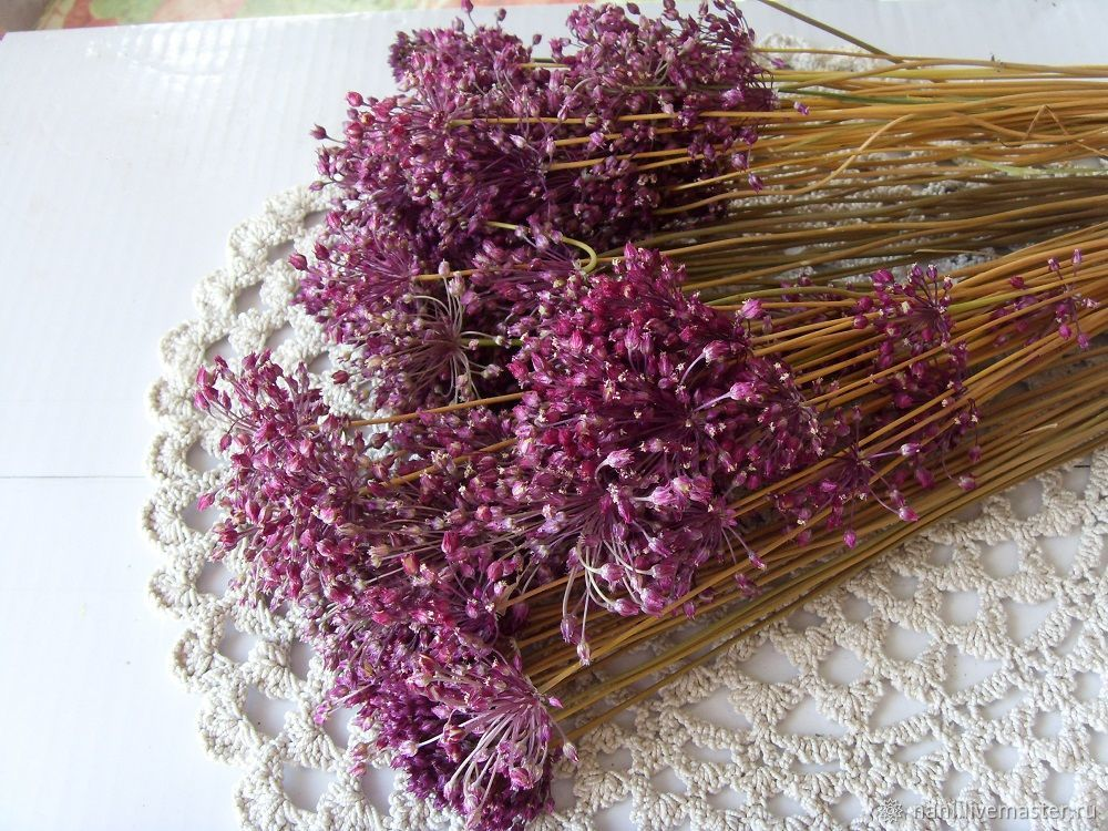 Сухие цветы дикого лука, букет из 25 + шт. головок, Цветы, Анна,  Фото №1