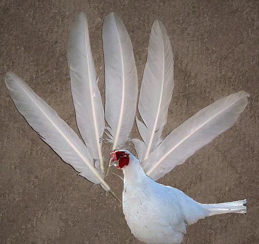 """Другие виды рукоделия ручной работы. Ярмарка Мастеров - ручная работа. Купить Перья птицы """"Ушастый фазан"""" (белый). Handmade."""
