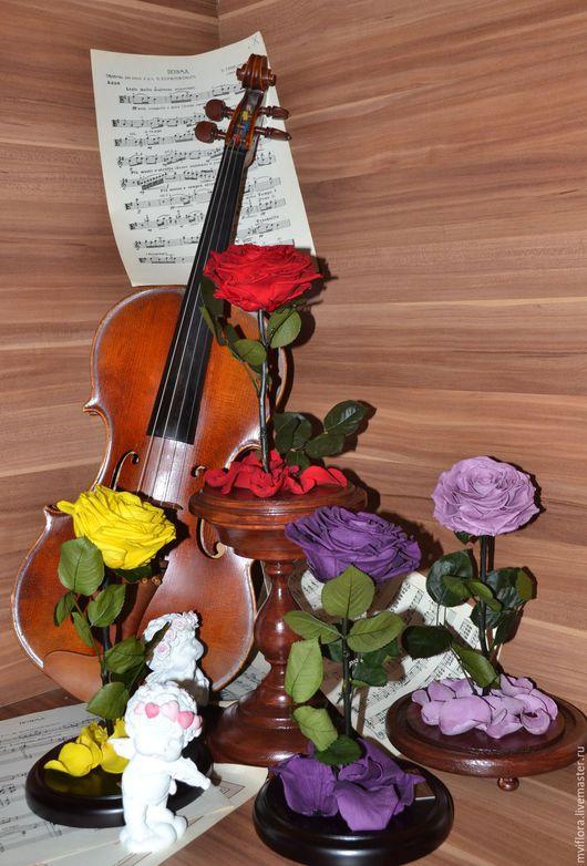 Розамелия `Музыка сердца` внесет в Вашу жизнь романтическую сказку.