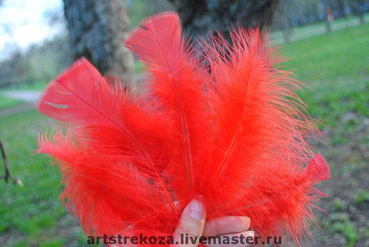 Перья красные, набор - 5 штук 60руб