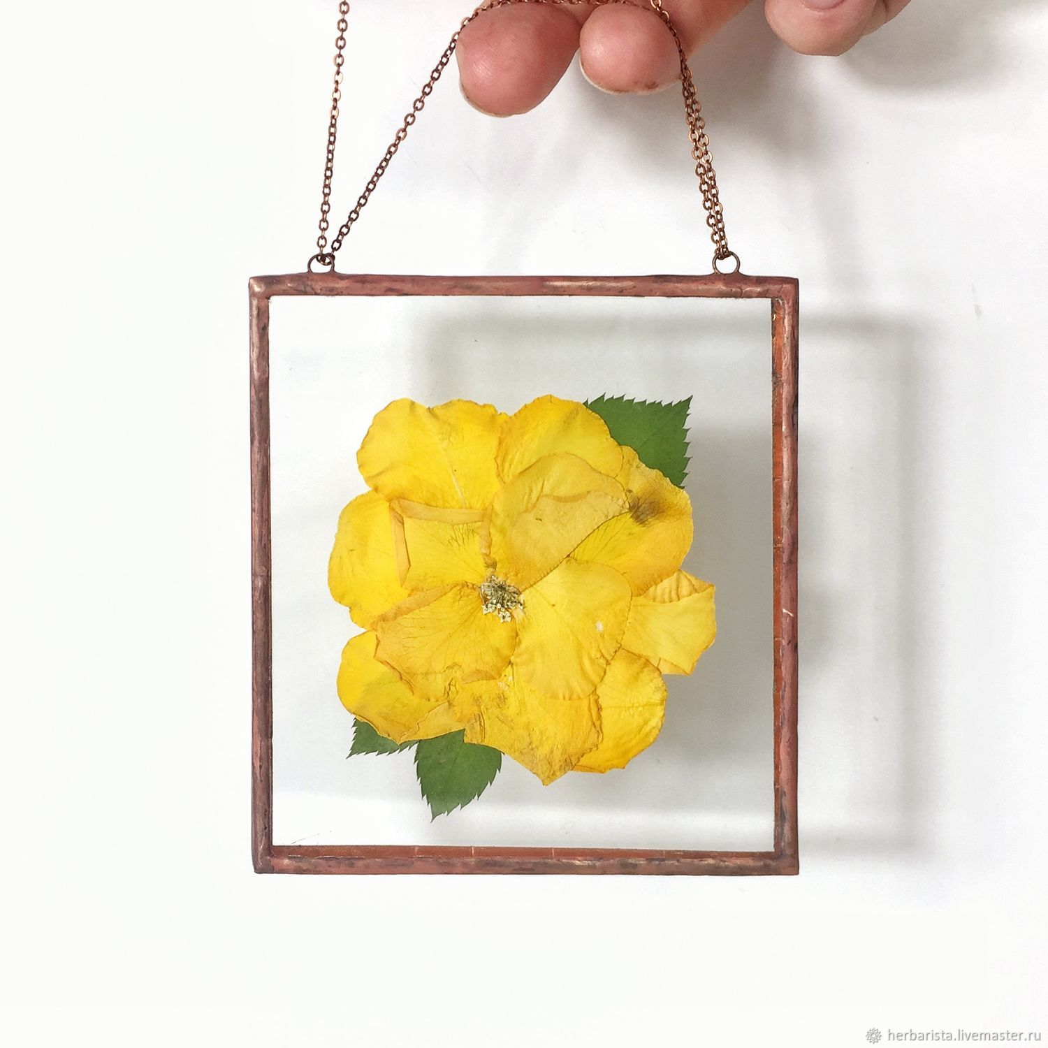 Mini-plants in glass - yellow rose, Suspension, Moscow,  Фото №1