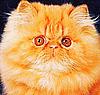 Amber Cat - Ярмарка Мастеров - ручная работа, handmade