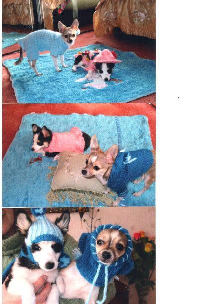 Аксессуары для собак, ручной работы. Ярмарка Мастеров - ручная работа. Купить Одежки для Тошки. Handmade. Мохер, шерсть