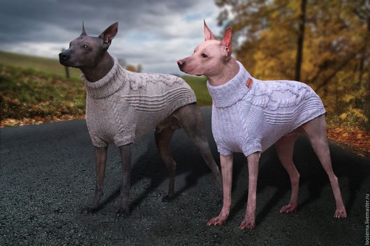 Одежда для собак, ручной работы. Ярмарка Мастеров - ручная работа. Купить Свитер для собаки. Handmade. Оливковый, свитер для собаки