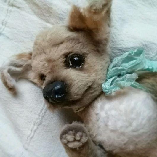 Мишки Тедди ручной работы. Ярмарка Мастеров - ручная работа. Купить Собака Джессика Чихуахуа. Handmade. Собака, чихуахуа, подарок