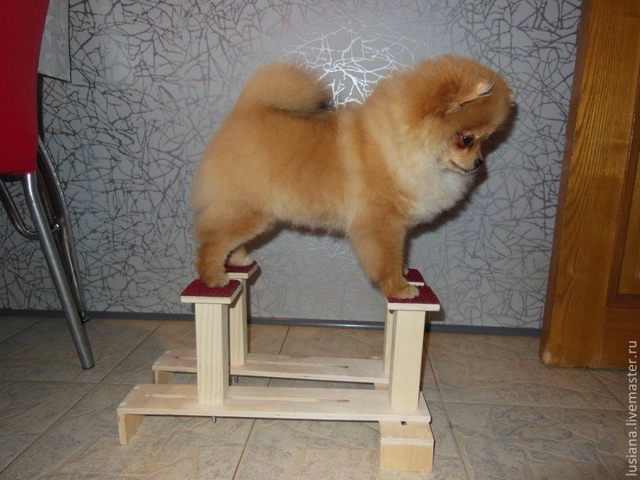 S - the smallest dog breeds. Size (cm): 17-25 * 30-45, platform legs 7*7. The simulator is fully collapsible. The poles height is 17 cm.