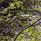 """Фотокартины ручной работы. Фотокартина """"Лесной мотив №1"""". Андрей. Интернет-магазин Ярмарка Мастеров. Фотография, лес, фотография в подарок"""