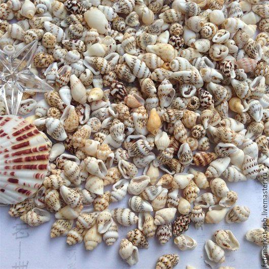 Для украшений ручной работы. Ярмарка Мастеров - ручная работа. Купить Ракушки морские 0,9-1,5 см. Handmade.