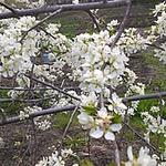 Маргарита (Homestile) - Ярмарка Мастеров - ручная работа, handmade