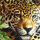 Животные ручной работы. Заказать Отдыхающий леопард. Анастасия (Kartiny74). Ярмарка Мастеров. Интерьер, вышивка, мулине дмс (dms)
