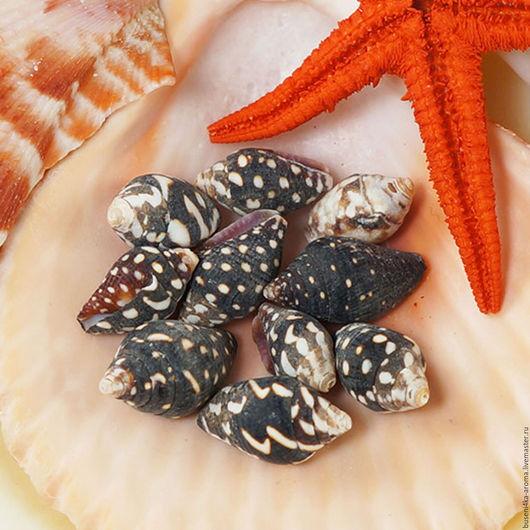 Для украшений ручной работы. Ярмарка Мастеров - ручная работа. Купить 10шт Ракушки миниатюрные 1-1,7см (темные). Handmade.