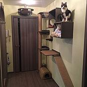 Для домашних животных, handmade. Livemaster - original item Wall system for large cats. Handmade.