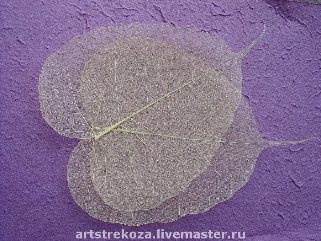 Листья скелетированные , Бо натуральные, длина 16-17 см, ширина 13см 1 шт - 30 руб, от 30 шт - 20 руб за шт.