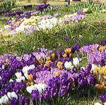 Шафрановая весна - Ярмарка Мастеров - ручная работа, handmade