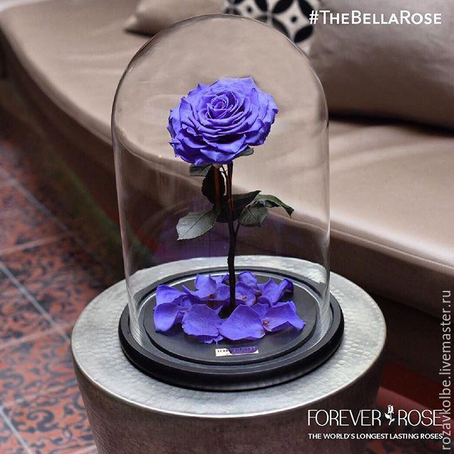 Роза в колбе фото цена