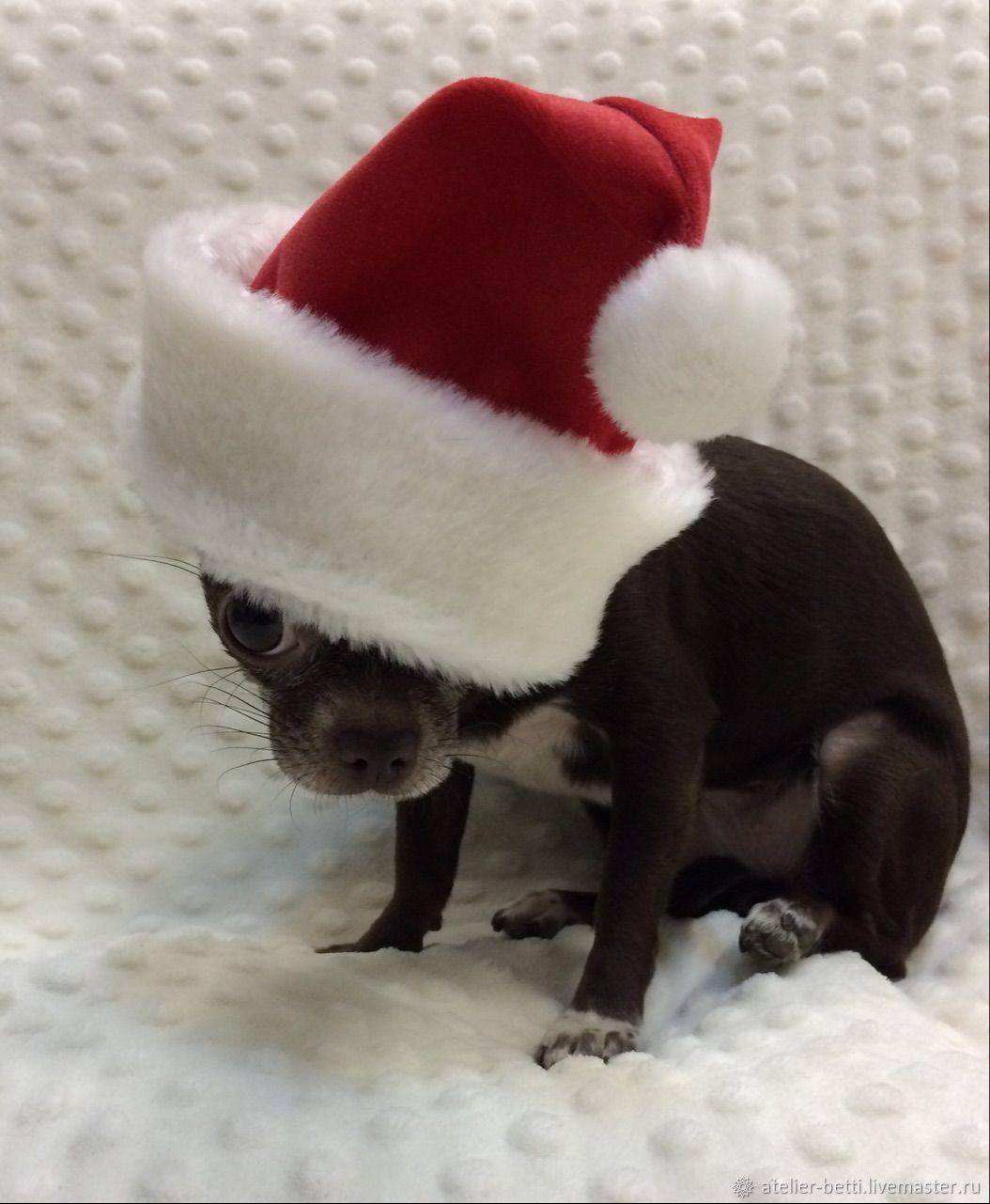 Одежда для питомцев: Шапка Деда Мороза, Одежда для собак, Санкт-Петербург, Фото №1