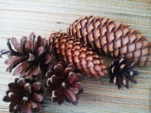 Шишки давно стали незаменимым природным декором для создания новогодних и рождественских композиций. Все они разного размера и выглядят по-разному, но каждая из них может найти применение в творчестве