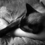 Лена Мо (2-Cats) - Ярмарка Мастеров - ручная работа, handmade